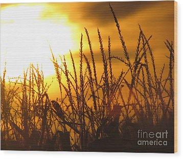 Farming Sunset Wood Print by France Laliberte