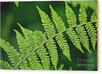 Wood Print featuring the photograph Fern Seed by Sharon Elliott