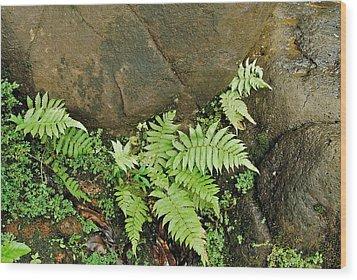 Ferns Wood Print by Michael Peychich