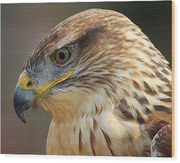 Ferruginous Hawk Wood Print by Paulette Thomas