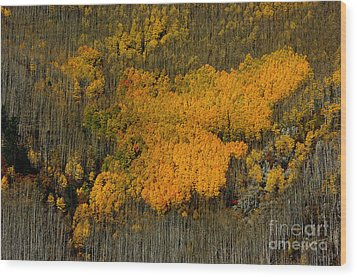 Fine Art Of Nature Wood Print by Vicki Pelham