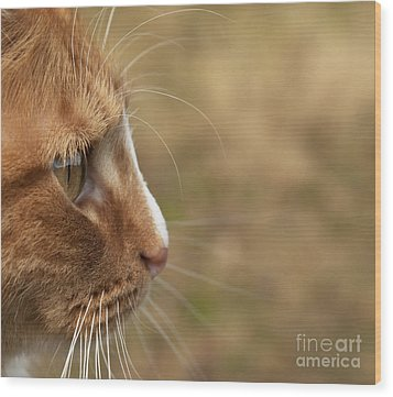 Wood Print featuring the photograph Flitwick The Cat by Jeannette Hunt