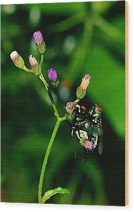Flower Fly Wood Print by Arik S Mintorogo