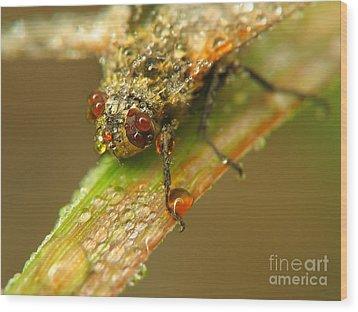Fly Wood Print by Odon Czintos