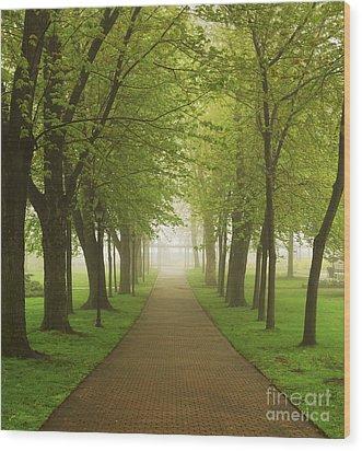 Foggy Park Wood Print by Elena Elisseeva