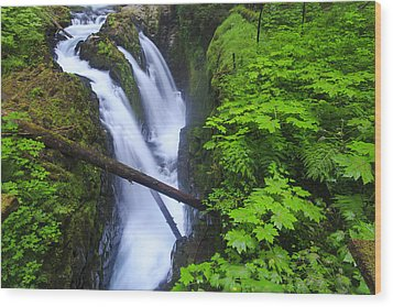 Forest And Stream In The Olympic Forest Wood Print by Gavriel Jecan