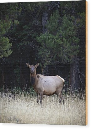 Wood Print featuring the photograph Forest Elk by Steve McKinzie