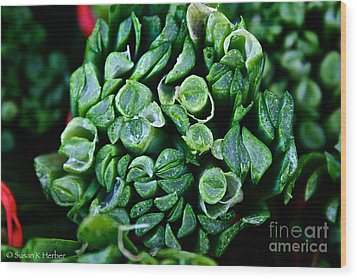 Fresh Chives Wood Print by Susan Herber