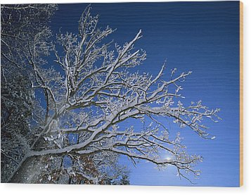 Fresh Snowfall Blankets Tree Branches Wood Print by Tim Laman