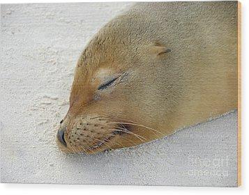 Galapagos Sea Lion Sleeping On Beach Wood Print by Sami Sarkis