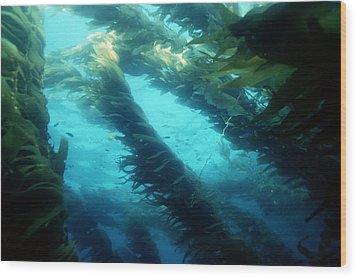 Giant Kelp Wood Print by Georgette Douwma