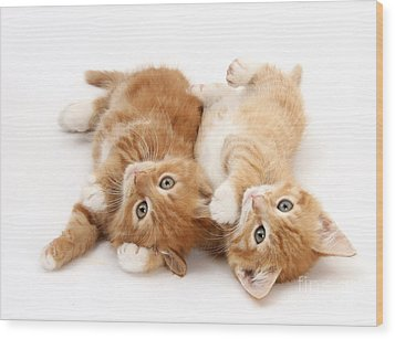 Ginger Kittens Wood Print by Mark Taylor