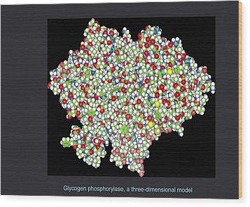 Glycogen Phosphorylase, Molecular Model Wood Print by Francis Leroy, Biocosmos