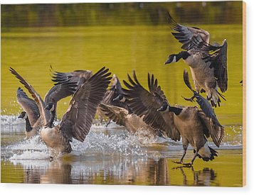 Golden Geese Wood Print by Brian Stevens