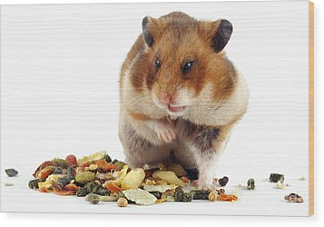 Golden Hamster Wood Print by Jane Burton