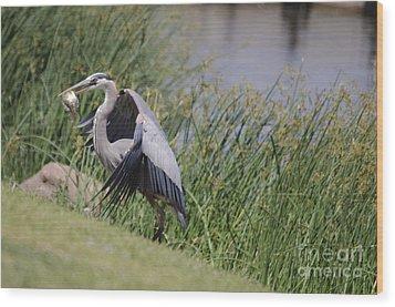 Great Blue Heron Wood Print by Donna Greene