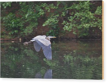 Great Blue Heron Flying Low Wood Print by Mary McAvoy