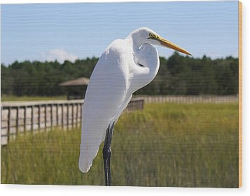 Great White Egret In The Marsh Wood Print by Paulette Thomas