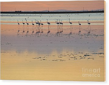 Greater Flamingos In Pond At Sunset Wood Print by Sami Sarkis