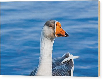 Wood Print featuring the photograph Greater White-fronted Goose 2 by Ann Murphy