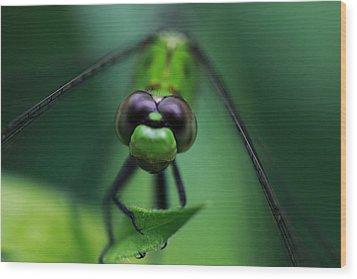 Green Dragon Wood Print by Paul Slebodnick