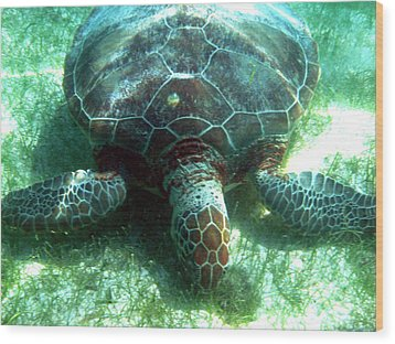 Wood Print featuring the photograph Green Sea Turtle by David Wohlfeil