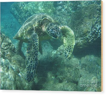 Green Sea Turtle Hawaii Wood Print by Bob Christopher