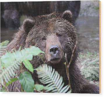 Grizzley - 0011 Wood Print by S and S Photo