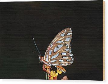 Gulf Fritillary Butterfly Wood Print by Jim McKinley