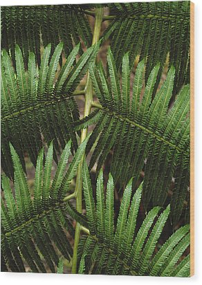 Hapu'u Fern Wood Print by G. Brad Lewis