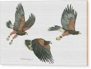Harris Hawk Cast Wood Print by Tim McCarthy