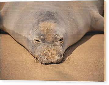 Hawaiian Monk Seal Wood Print by Dave Fleetham - Printscapes