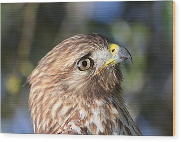 Wood Print featuring the photograph Hawk At Viera by Jeanne Andrews