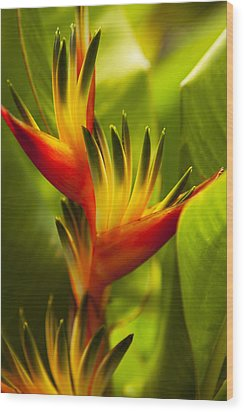Heliconia Wood Print by Dana Edmunds - Printscapes