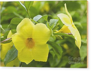 Hibiscus Wood Print by Blink Images