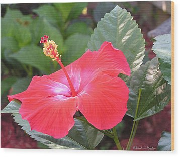 Hibiscus Flower Wood Print by Deborah Hughes