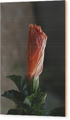 Wood Print featuring the photograph Hibiscus Portrait by Charles Dana