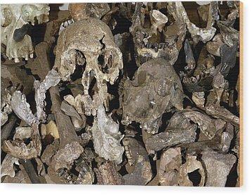 Hominid Skull Casts Wood Print by Volker Steger