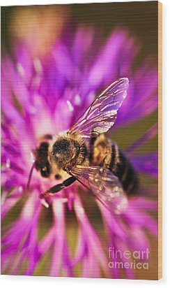 Honey Bee  Wood Print by Elena Elisseeva