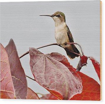 Hummingbird Wood Print by Paulette Thomas
