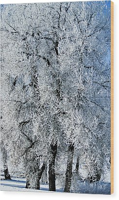 Iced Wood Print by Colleen Coccia