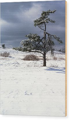 Iced Tree Shenandoah National Park Wood Print by Thomas R Fletcher