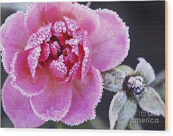 Icy Rose Wood Print by Elena Elisseeva