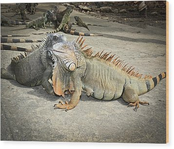 Wood Print featuring the photograph Iguana Family by Nick Mares