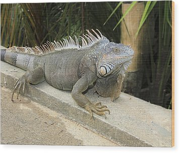 Wood Print featuring the photograph Iguana by Nick Mares