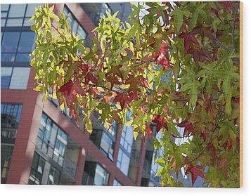 Inner City Autumn Wood Print