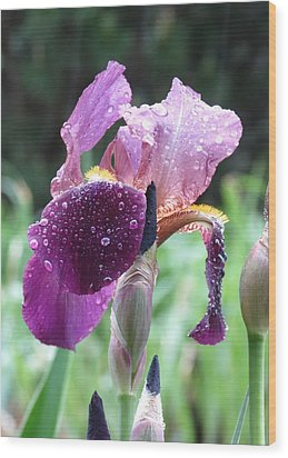 Iris Wood Print by Rebecca Overton