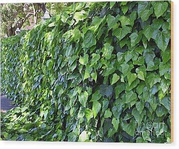 Ivy Wall Wood Print by Carol Groenen