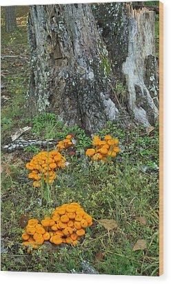 Jack Olantern Mushrooms 16 Wood Print by Douglas Barnett