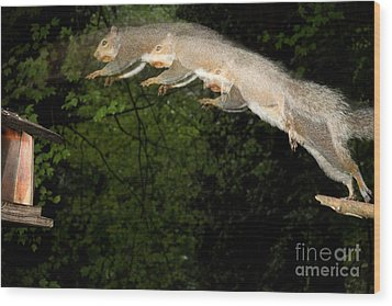 Jumping Gray Squirrel Wood Print by Ted Kinsman